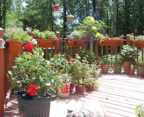 Try container gardening – it's easy
