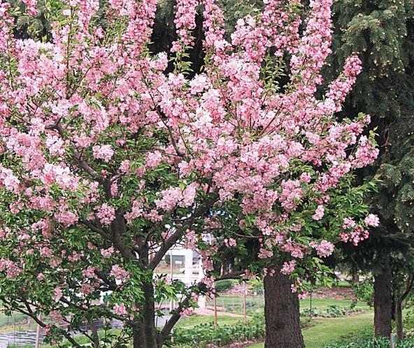 Pruning workshop offered