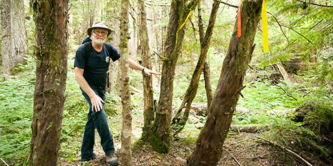 Ancient trees, historic sites at risk in Roberts Creek Headwaters Forest
