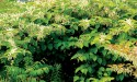 Invasive plant strategy stalls