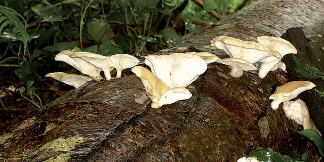 Mushroom fest coming soon