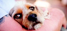 Pets are friends with emotional benefits