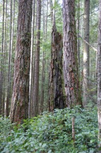 'Chanterelle Forest' to be logged despite opposition