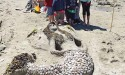Sandcastle competition again draw hundreds to sunny Davis Bay