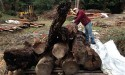 New home sought for ancient logs