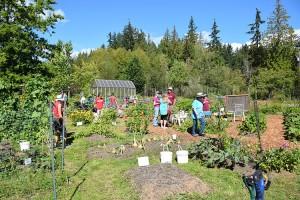 bot-garden-harvest