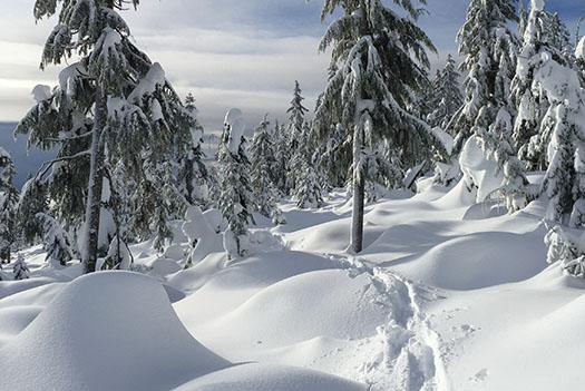 Loppet & Snowshoe Challenge
