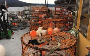 P 3 crab traps