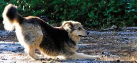Keeping sport-loving pets injury-free