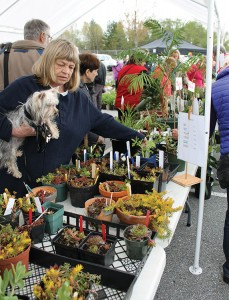 P 1 gibsons plant sale Pic 1
