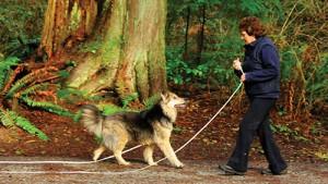 P 7 A pet dog longline