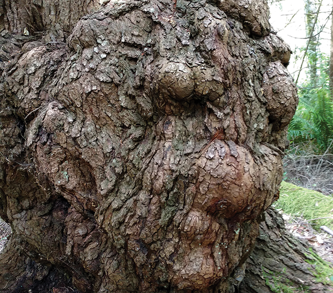 Gnarliest tree-photo winners
