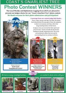 gnarliest tree contest