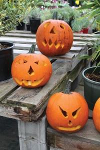 P 1 Pumpkins