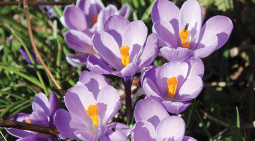 Spring sighting