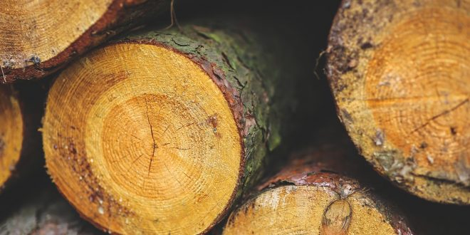 Have your say on logging plans